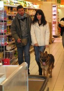 Foto di cane guida in addestramento al supermercato
