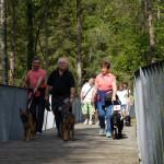 immagine di alcuni cani in compagnia dei volontari e delle famiglie affidatarie