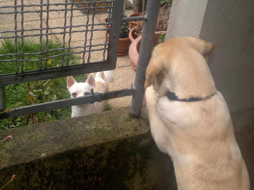 Immagine di Raf che fa amicizia con un gattino bianco