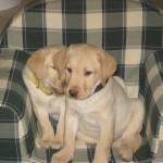 Raf e Clara, da cuccioli