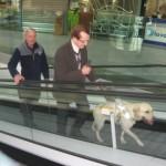 Immagine di un cane guida che accompagna il non vedente sulle scale mobili