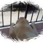 immagine di Raf, solitario, che guarda giù dal terrazzo
