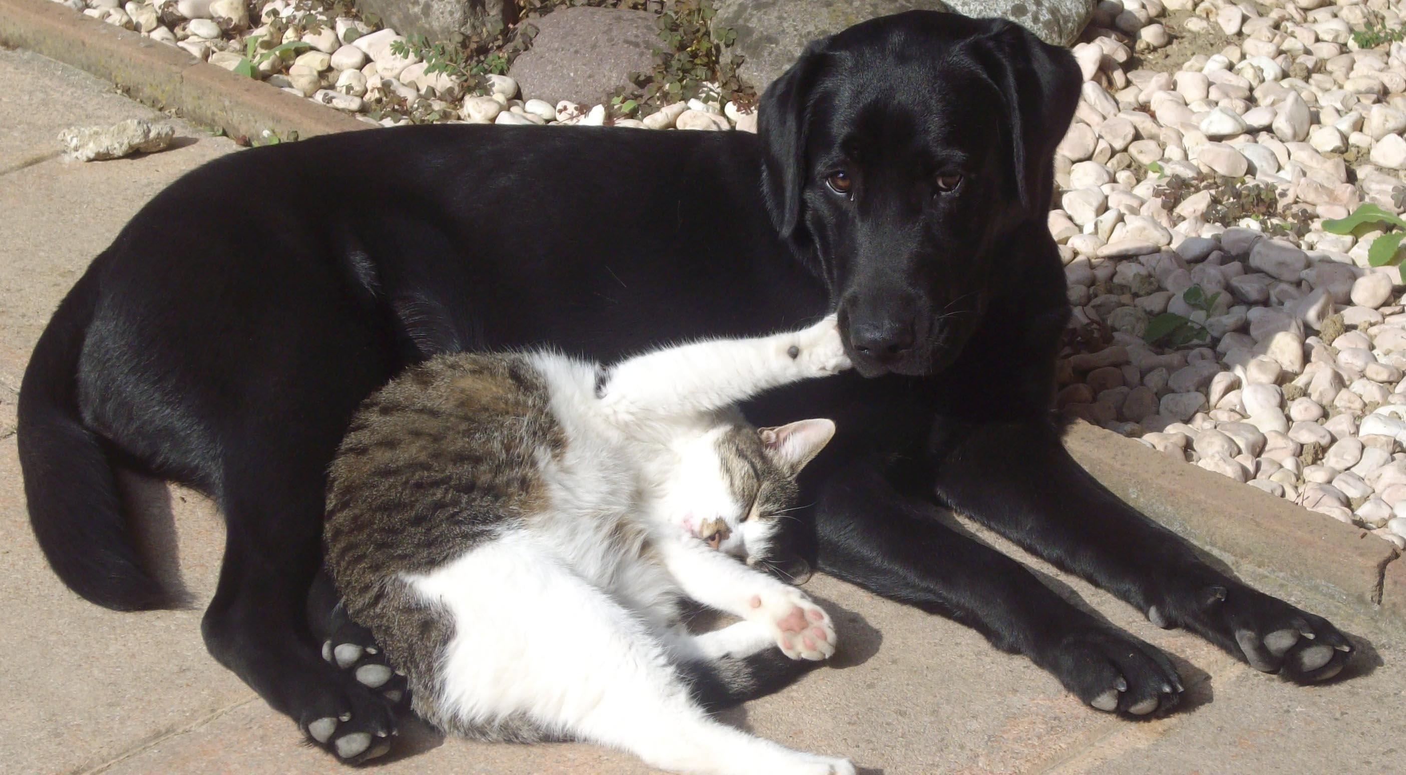 Immagine di Tessa che gioca con un gattino bianco e grigio