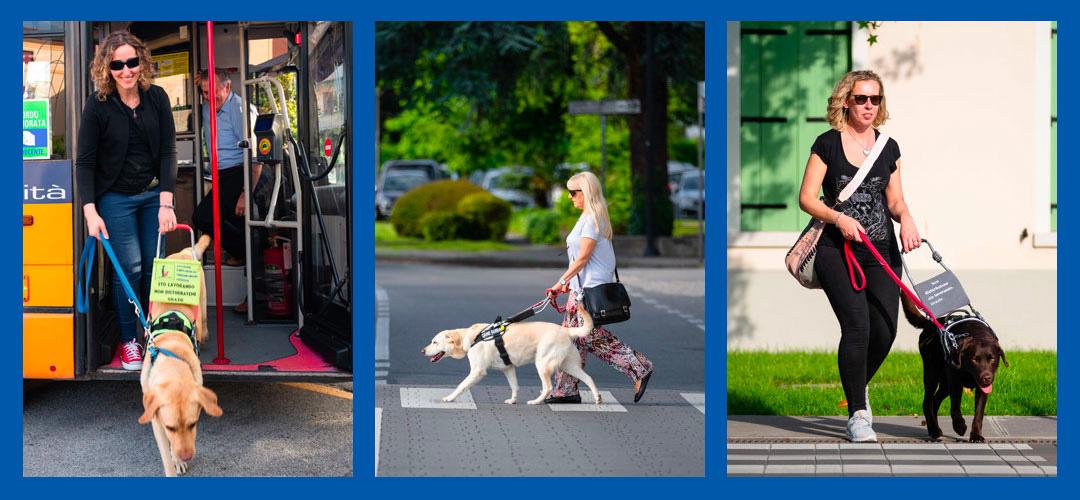 Immagine che ritrae tre persone non vedenti aiutate dal loro cane guida